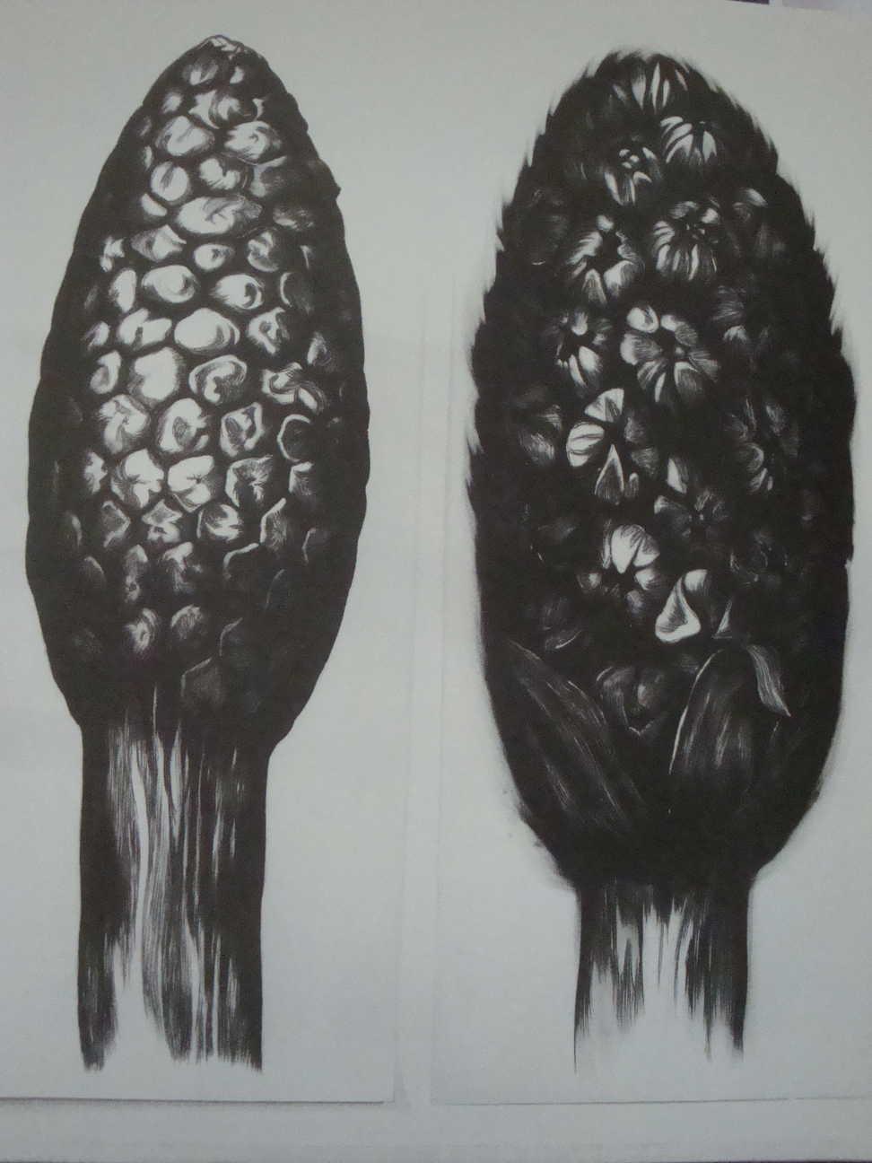 Herbiers – 280 x 150 cm